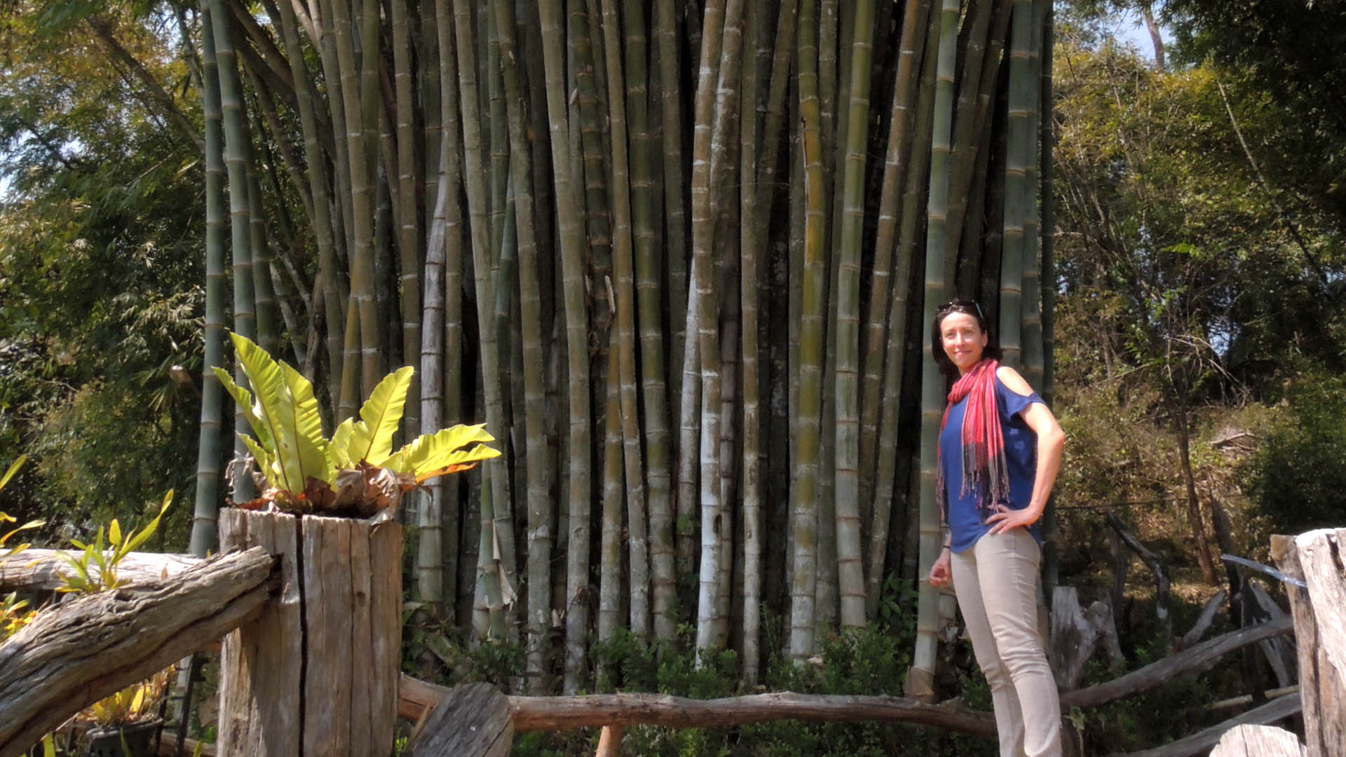 Maria in a bamboo forest on the Myanmar-Thailand border