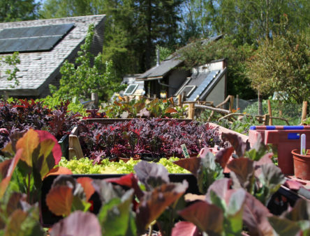 Growing organic food sustainably at CAT