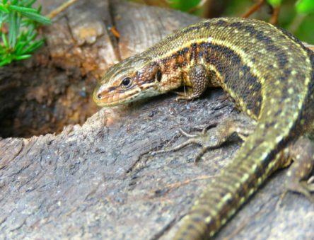 Protecting biodiversity is key to sustainable ecology