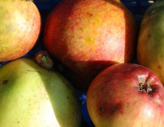 Apples at CAT