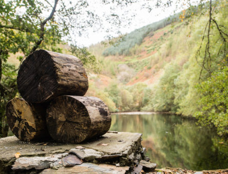 Logs and the CAT Reservoir