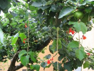 The Edible Forest Garden