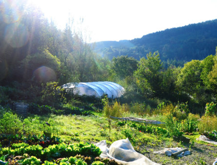 organic gardens at CAT