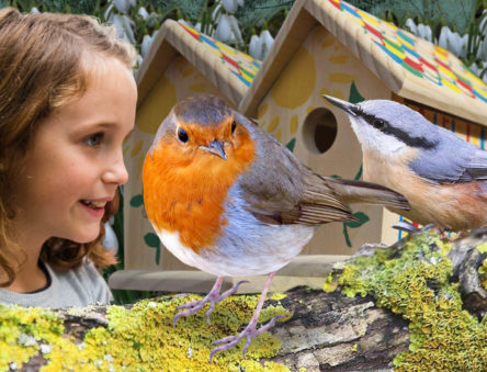bird box making activity