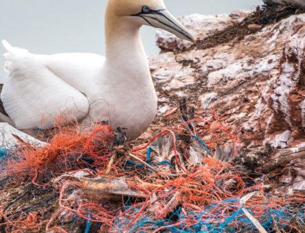 Bird and plastic waste