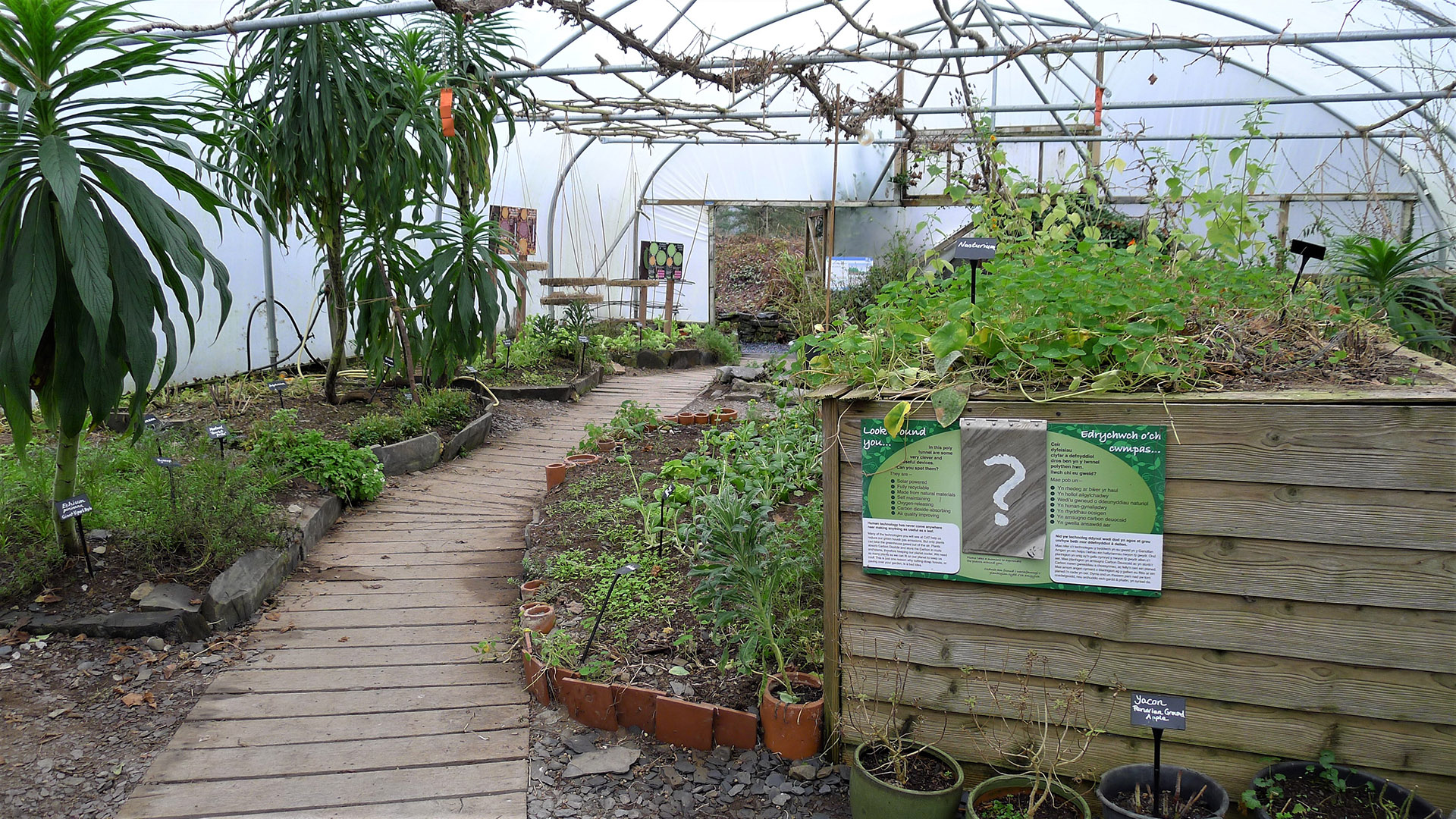 Polytunnel at CAT in winter