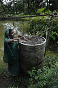 In Bangladesh, mother-of-four Nila Boti grows vegetables in a ring-garden to protect her produce from floodwater. Photo credit: Department for International Development / Rafiqur Rahman Raqu