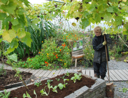 polytunnel planting