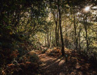 CAT woodlands - Credit Visit Wales