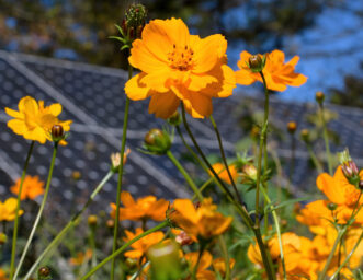 Cosmos in front of Solar Panels